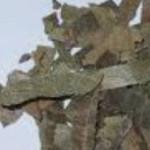 Loquat Leaf (pi pa ye)