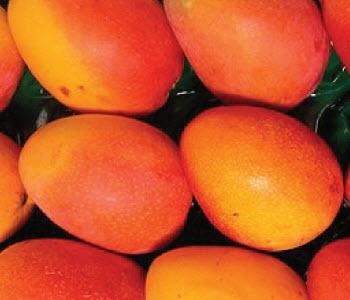 Pearl Mangos