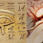 Pineal Gland Experiment [Food Diary Week 1]