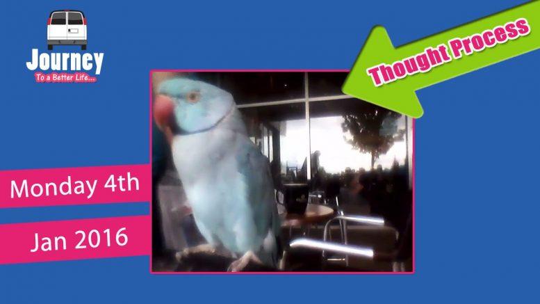 Random weirdness, day at coffee shop babysitting a parrot